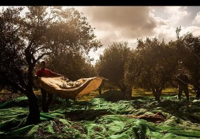 Crossing Into the Unknown: The Plight of Migrants in the Fields of Greece (Huffington PostUK)